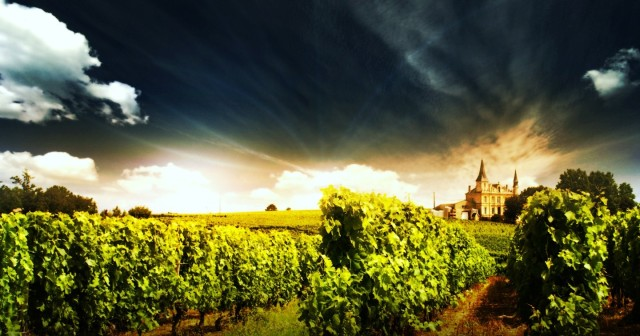 Heavenly Vineyards