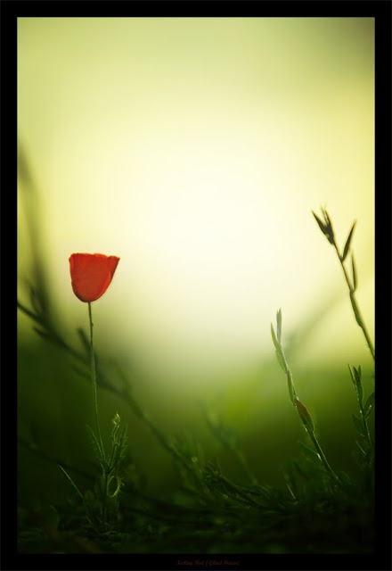 Feeling_Red_by_gilad