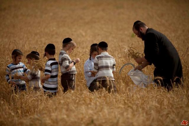 haredim-celebrating-shavuot