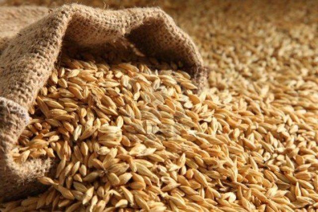 9748198-barley-seed-pile-bag-sack