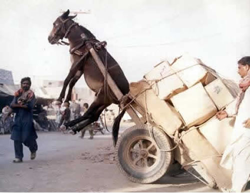 donkey-overturned-cart