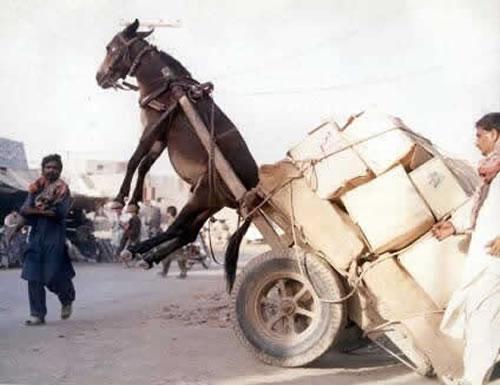 donkey-overturned-cart