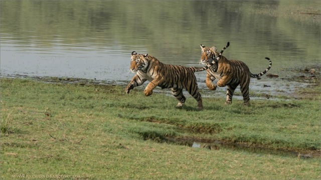 DSC_4513 Cubs on the Run 1600 share
