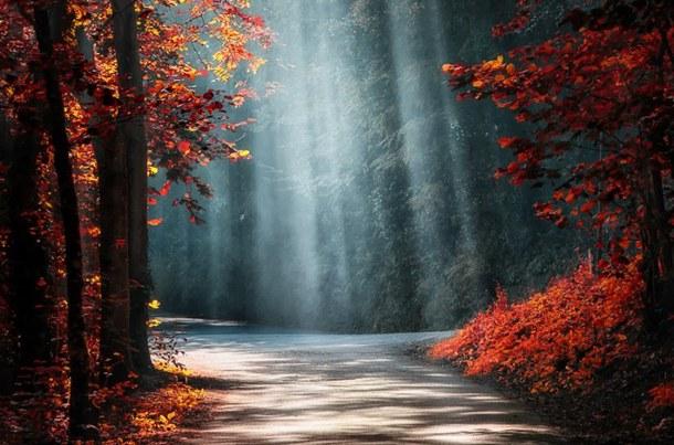 Favim_com-autumn-beautiful-highway-light-650447