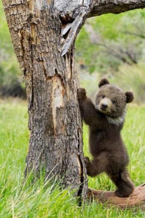 bearygood
