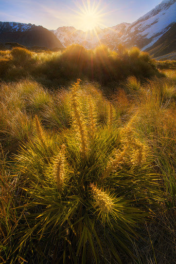 Spiky - Photography by +Goff Kitsawad bit.ly-goffkitsawad #grass #sunset #nature