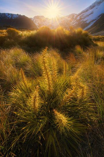 Spiky - Photography by +Goff Kitsawad bit.ly-goffkitsawad #grass #sunset #nature
