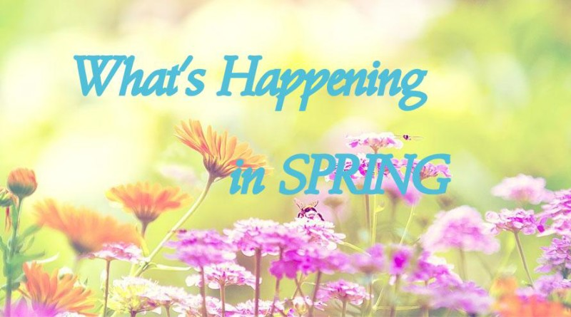 Whats-Happening-in-Spring-800x445